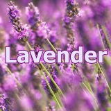 lavender_07