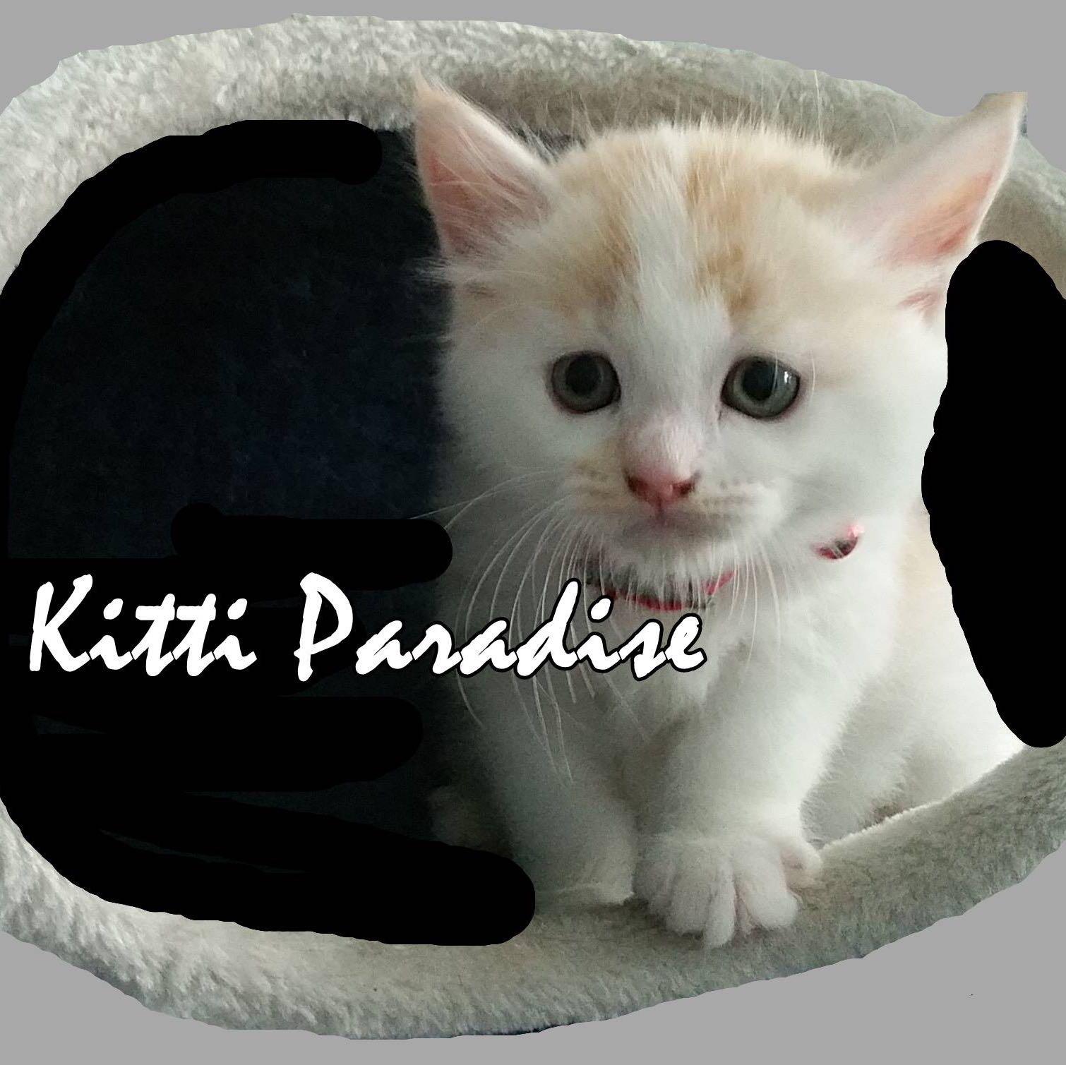 kittiparadise