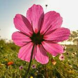 flora_b
