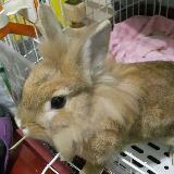 rabbitq