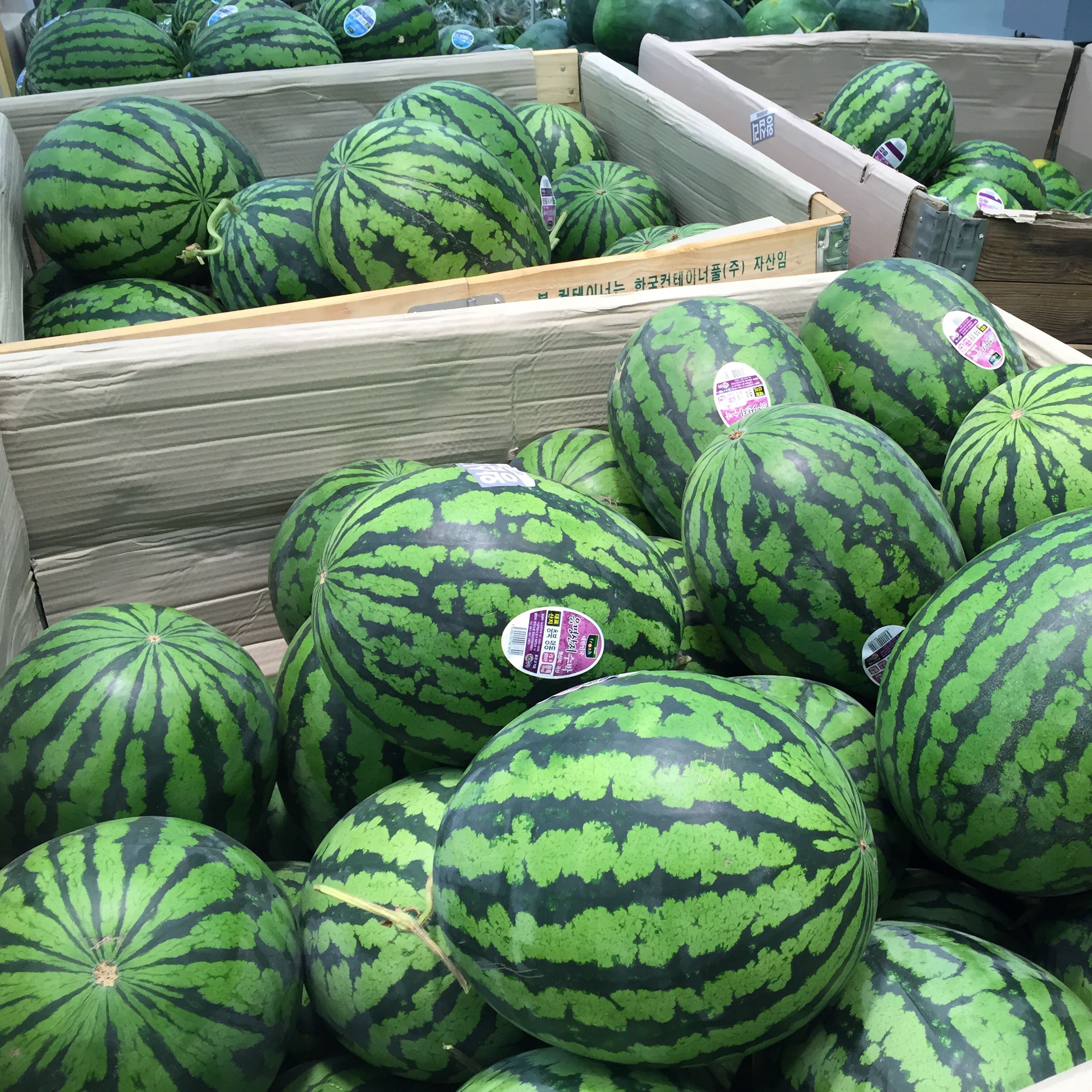 giantwatermelons