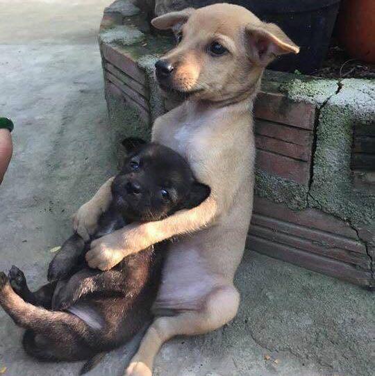puppypower4ever