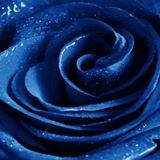 bluerosevenom
