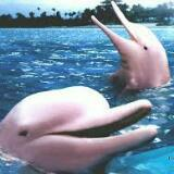 dolphin.freewilly