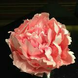 pinkross