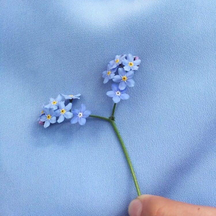 petalsxo