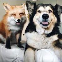 foxoff.co
