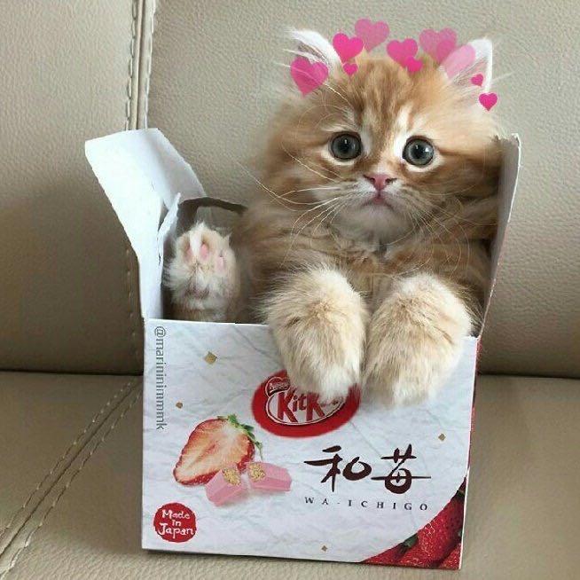 catn1p