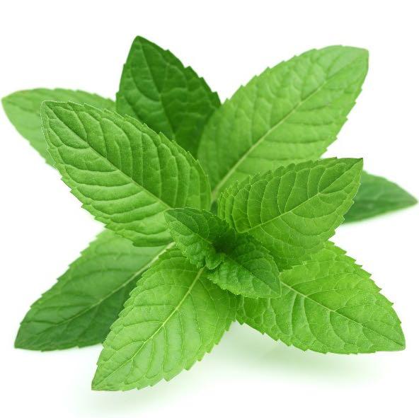 greenpeppermint