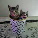 kittycatz74