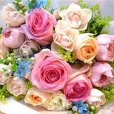 elegant_rose