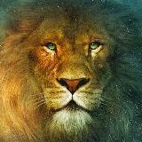 lionofthedesert