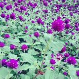purpleecloset