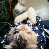 missy.kitkat