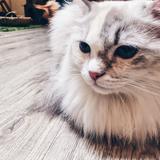 meow96