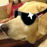 cheshiredoge