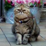 catcat16