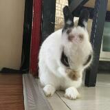 wabbit101