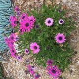 wildflowerspring