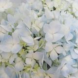 floral_flo