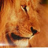 lion3ss