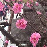 treewong