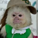 grumpy_monkey