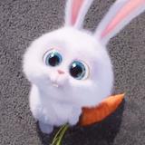 bunnygo