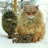shadowz_petshop
