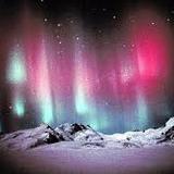 auroraaurelia