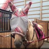 horselvr124