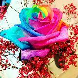 simplyflower