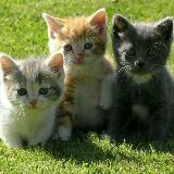three_little_kittens