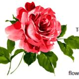 flower_n_moon