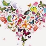 butterflyblogshop