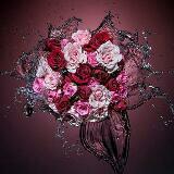 rosebella