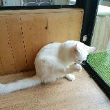 shopaholicist