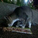 faithcat