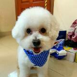 hapi_pet_life