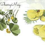sherrymay88