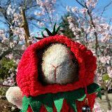 rabbit_jaijai