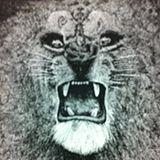 hs_tiger73