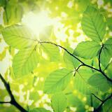 sunshinestorehk