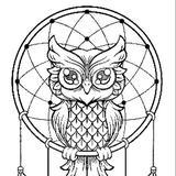 owl_cheer