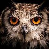 owlcity_1992