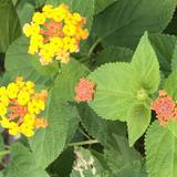 littlelittleflower
