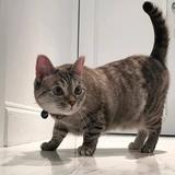 cute_cat29