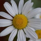 lululemonlover