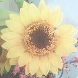daisy11121