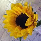 sunshiny88